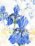 Blue Irises by Laura Boyd, Painting, Ink and Watercolour