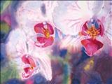 Orchids III by Laura Boyd, Painting, Watercolour